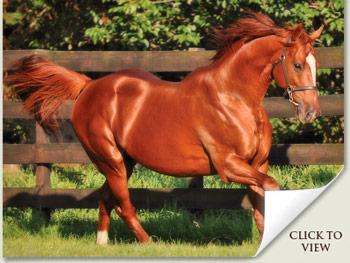 Admire Main Stallion