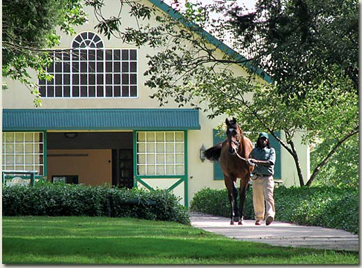 summerhill stallion barn