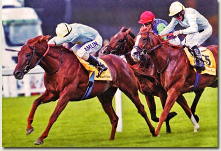 conduit and tartan bearer king george vi and queen elizabeth stakes
