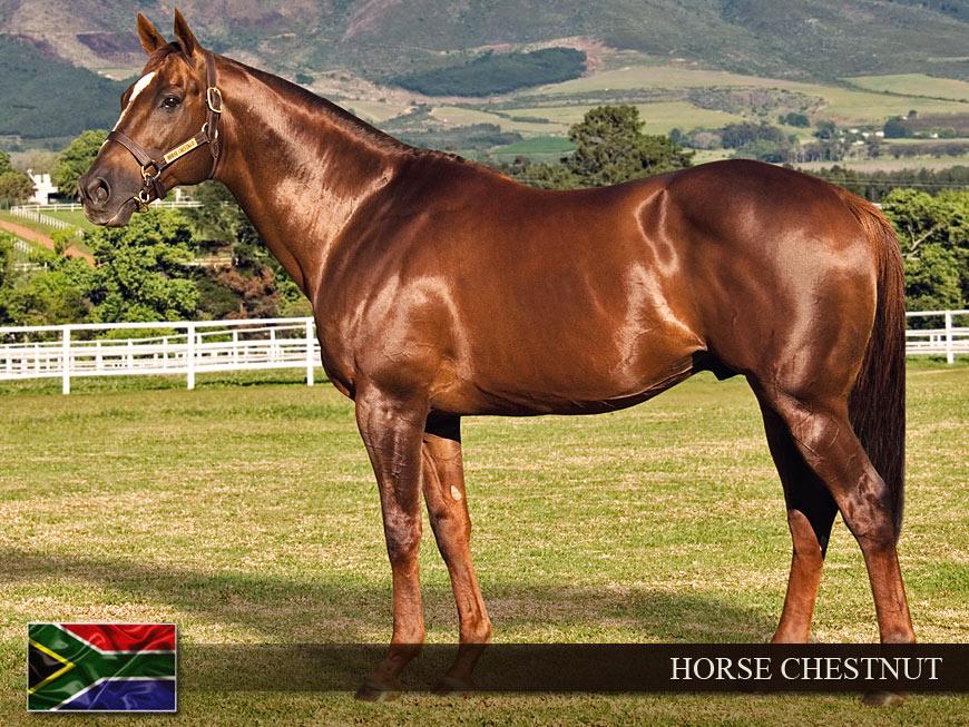 Chestnut Horse - photo#43