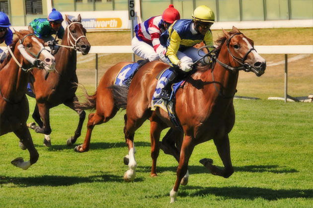 Final Button Horse