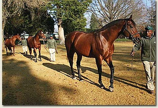 machiavellian stallions