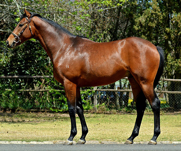 Lot 104: Intandokazi (AUS) (Encosta De Lago x Bella Princess)