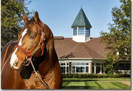 A.P. Indy Stallion