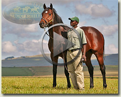 summerhill stallions video