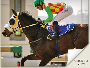 checcetti racehorse a 2009 emperors palace ready to run graduate