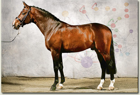 Thoroughbred Genetics