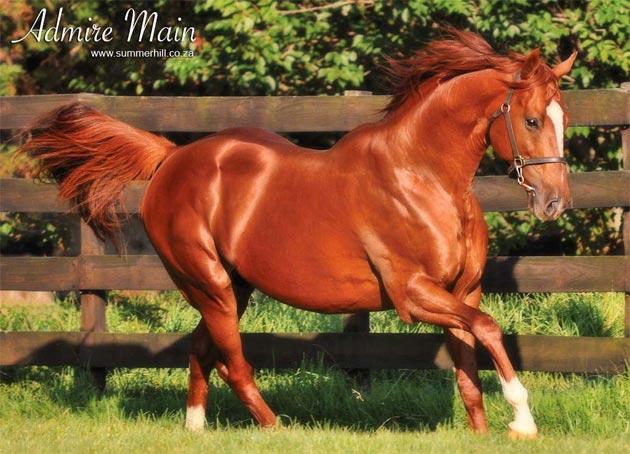 admire-main-stallion.jpg