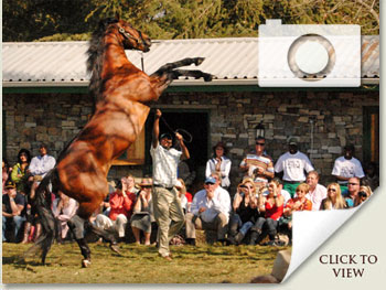 link to open the 2010 stallion day photo gallery