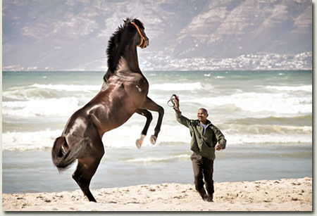 Gimmethegreenlight Horse on the Beach in Cape Town