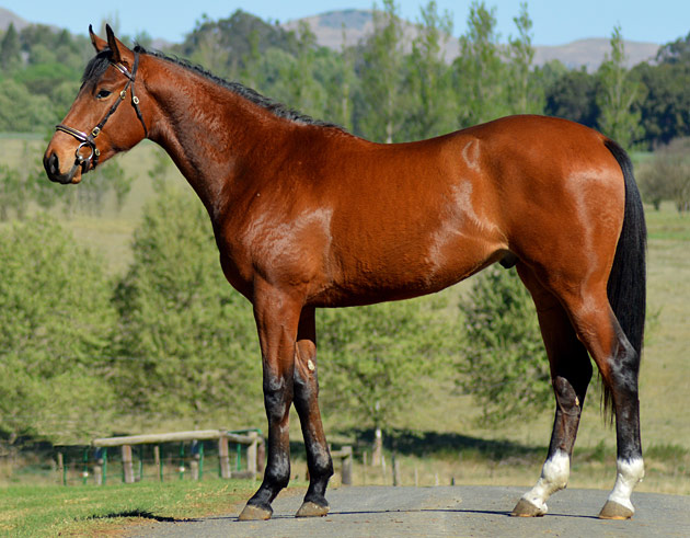 Lot 27: Crete (Kahal x Shoe Dance)