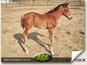 ravishing - life begins foal