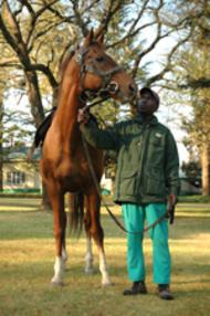 iktimal horse