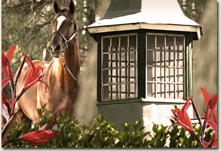 summerhill stud stallion barn