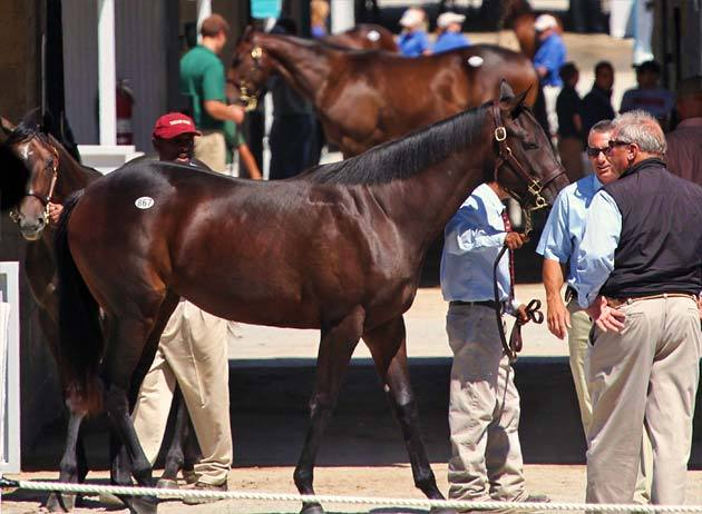 keeneland-september-yearling-2012-3.jpg