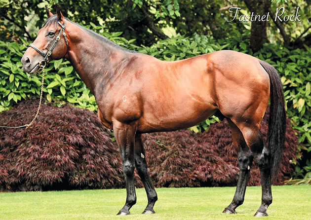 Fastnet Rock Stallion