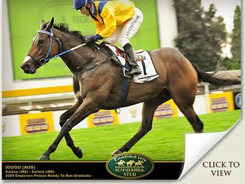 Igugu wins the SA Fillies Classic