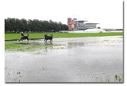 rain at york racecourse