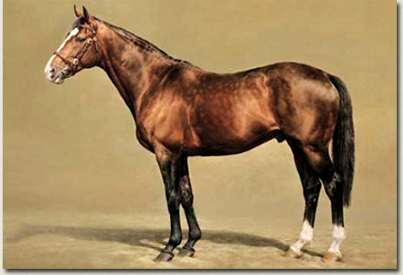 Sadler's Wells Stallion