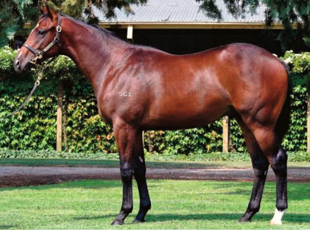 Inglis Melbourne Premier Yearling Sale Day 2 Top Lot