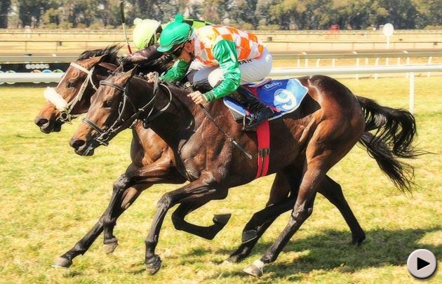 Casha Horse