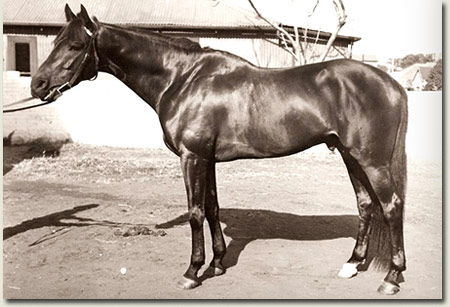 st pauls 1946 durban july winner