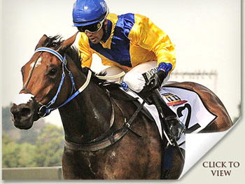 Igugu South African Triple Tiara Winner