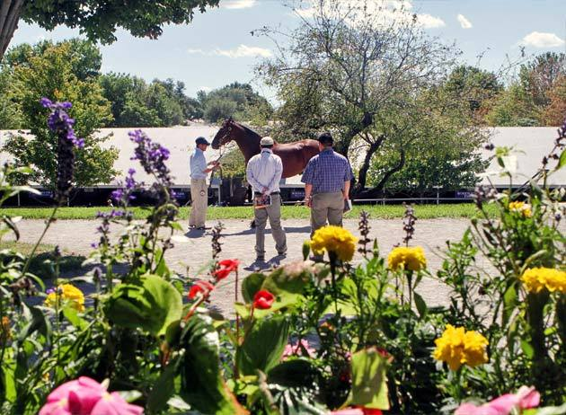 keeneland-september-yearling-2012-1.jpg
