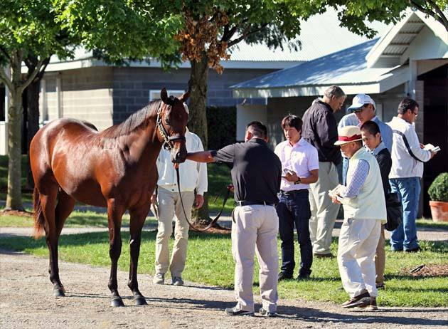 keeneland-september-yearling-2012-4.jpg