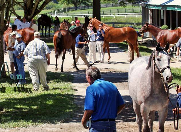 keeneland-september-yearling-2012-2.jpg
