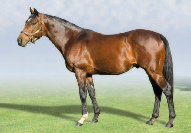 Casey Tibbs Stallion