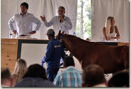 Michael Holmes Bloodstock Sale at Shongweni