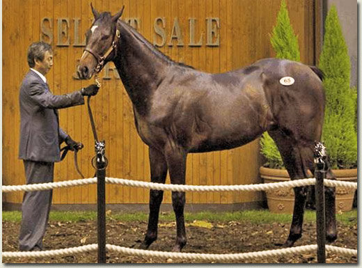 lot 65 Rock Of Gibraltar out of My Katies