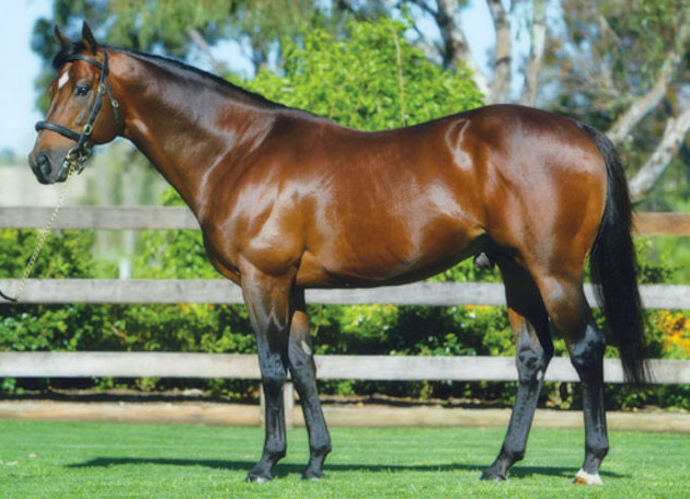 Danehill Dancer / Coolmore (p)