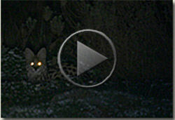 serval video