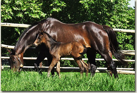 great attraction and foal by kahal