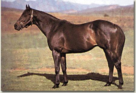 Foveros Stallion