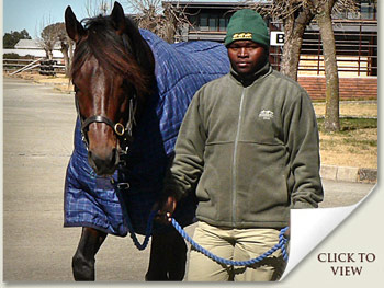 Stallion Bankable in Johannesburg Quarantine