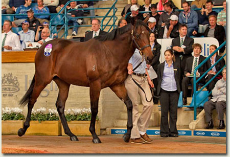 Inglis Easter Yearling Sale - Lot 200 Redoute's Choice - Helsinge