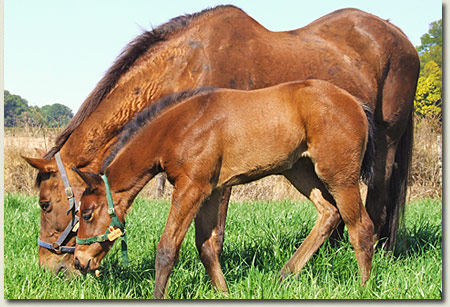 longfields and foal post image