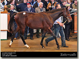 tattersalls october yearling sale lot 499 galileo