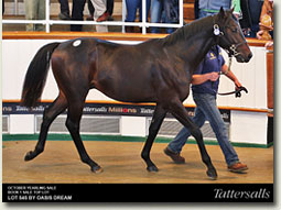 tattersalls october yearling sale lot 545 oasis dream