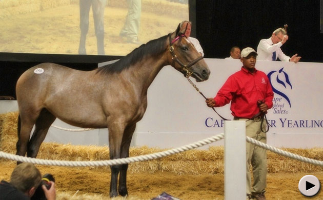 Cape Premier Yearling Sale Book 1 - Lot 150 Dynasty x Dancer's Daughter