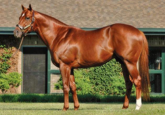 Speightstown Stallion