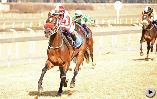 Francois P Horse