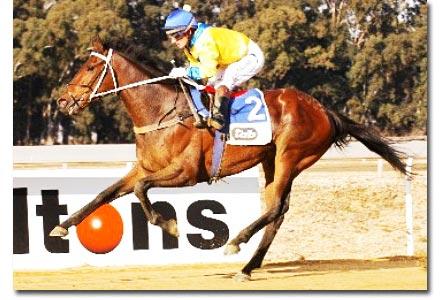 art of war racehorse