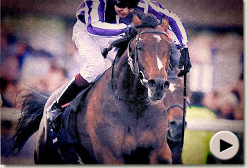Camelot St Leger Stakes Ad
