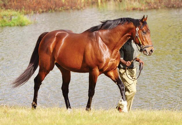 Brave Tin Soldier Stallion / Greig Muir (p)