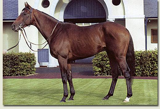 mullins_bay_stallion