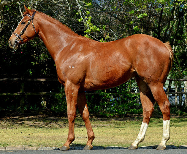 Lot 206: Rich Girl (AUS) (Rock Of Gibraltar x Miss Moguls)